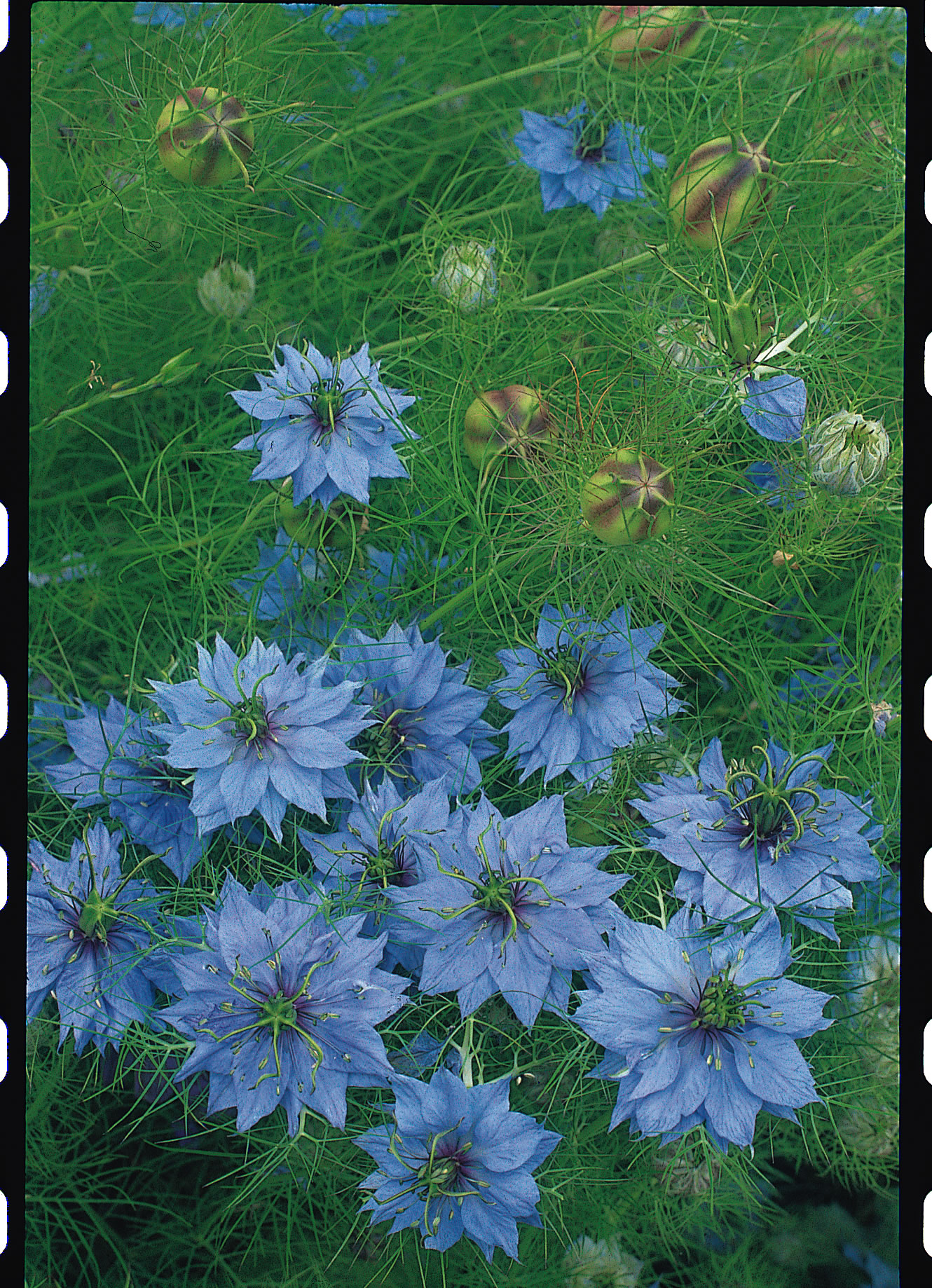 types of light blue flowers 28 images types of light